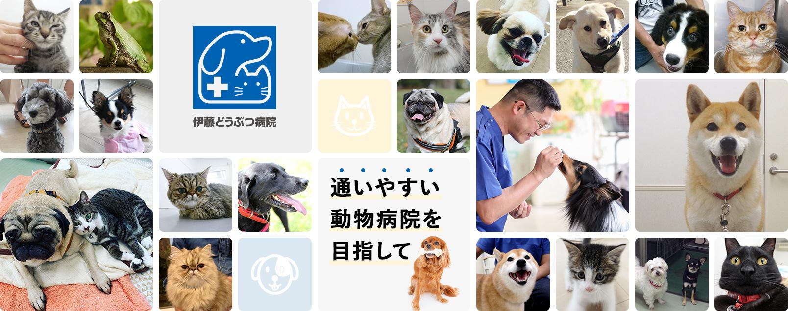 の 病院 近く 動物 日本医大病院近く プーアル動物病院